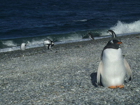 Île des pingouins