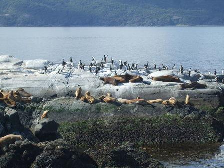 Île des loups marins