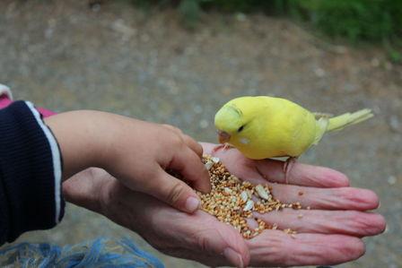 Oiseau et enfant